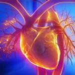 Distrofia Miotonica - Il cuore